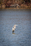 Heron Smithville Park Royalty Free Stock Images