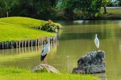 Heron standing Stock Image