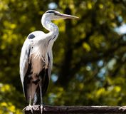 Heron standing on a surface stock photos