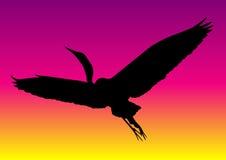 Heron at sunset Royalty Free Stock Photo