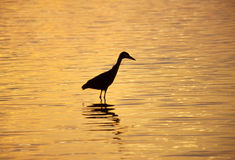 Heron at sunset Royalty Free Stock Photos