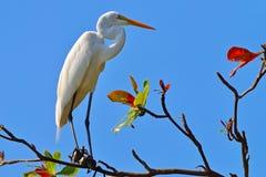 Heron. A heron in the tree Stock Photos