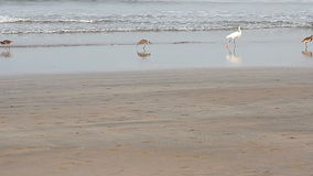 Heron on a tropical sea stock footage