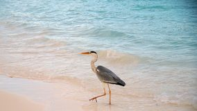 A heron Stock Photography