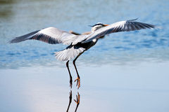 HerOn The Water Royalty Free Stock Photography