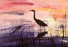 Heron in the water royalty free illustration