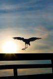 heron white wyładunku obrazy stock