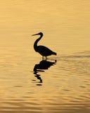 Heron1 Royalty-vrije Stock Fotografie