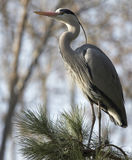 Heron4979 Stock Photo