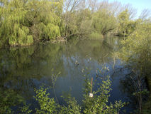 Heronry south pool, Little Paxton nature reserve. Cambridgeshire stock photos