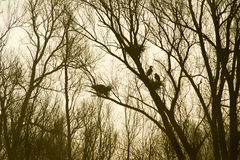 Heronry in trees Royalty Free Stock Photos