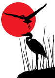 Herons Stock Image