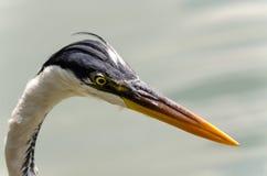 herons stock fotografie