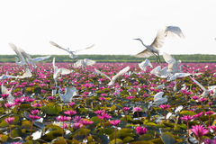 herons Fotografia Stock