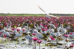 herons royalty-vrije stock afbeelding