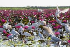 herons Fotografia Stock Libera da Diritti