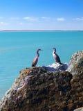 Herons on cliffs Stock Photos