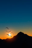 Herons in flight at sunset Stock Photography