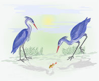 Herons on the hunt vector Stock Images