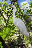 Herons pride Royalty Free Stock Images
