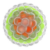 Herpes virus Royalty Free Stock Photography