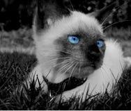 Herr Bojangles i gräset arkivfoton