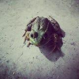 Herr Frog royaltyfri foto
