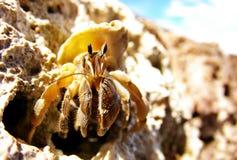 Herr Hermit Crab Stockbilder