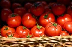 Herr Tomat royaltyfria foton