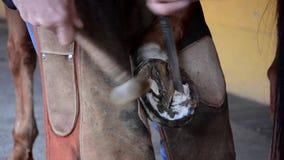 Herrador y caballo equinos almacen de metraje de vídeo