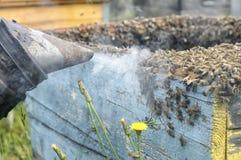 Herramienta de los apicultores del fumador para guardar abejas lejos de la colmena Fotos de archivo