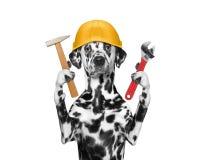 Herramientas de tenencia del constructor del perro en sus patas Imágenes de archivo libres de regalías