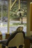 Dentista Tools imagen de archivo