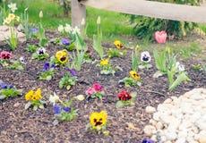 Herramientas miniatura del jardín y de la horticultura en primavera temprana fotografía de archivo