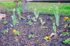 Herramientas miniatura del jardín y de la horticultura en primavera temprana foto de archivo libre de regalías