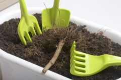 Herramientas miniatura para la floricultura Pequeños palas, bifurcaciones y rastrillos para cultivar la tierra en macetas Fotografía de archivo