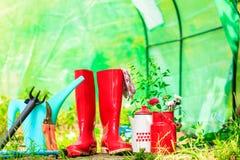 Herramientas que cultivan un huerto al aire libre en jardín Imagen de archivo libre de regalías