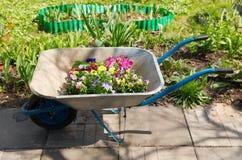 Herramientas que cultivan un huerto: carretilla con las flores coloridas fotos de archivo libres de regalías