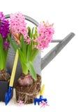 Herramientas que cultivan un huerto con las flores del jacinto Fotos de archivo libres de regalías