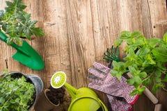 Herramientas que cultivan un huerto e hierbas al aire libre Fotos de archivo libres de regalías