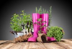 Herramientas que cultivan un huerto e hierbas al aire libre Imágenes de archivo libres de regalías