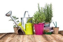 Herramientas que cultivan un huerto e hierbas al aire libre Fotografía de archivo libre de regalías