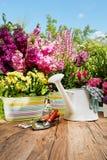 Herramientas que cultivan un huerto en el jardín Fotos de archivo libres de regalías