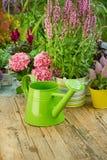 Herramientas que cultivan un huerto en el jardín Imagen de archivo libre de regalías