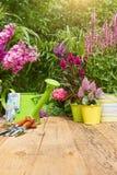 Herramientas que cultivan un huerto en el jardín Fotografía de archivo libre de regalías