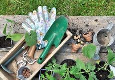 Herramientas que cultivan un huerto en una caja Fotografía de archivo libre de regalías