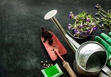 Herramientas que cultivan un huerto encendido en la pizarra negra - primavera imagen de archivo