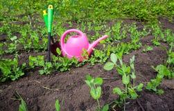 Herramientas que cultivan un huerto, regadera, plantas y suelo Fotografía de archivo libre de regalías