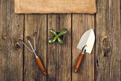 Herramientas que cultivan un huerto y accesorios en fondo de madera Visión superior Imagenes de archivo