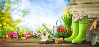 Herramientas que cultivan un huerto y flores de la primavera en la terraza imagen de archivo
